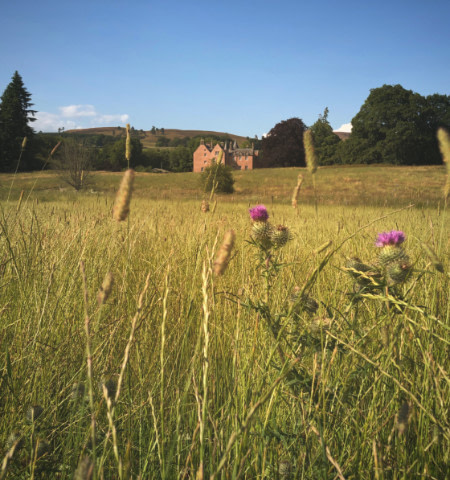 Bamff House in distance with thistle and long grasses